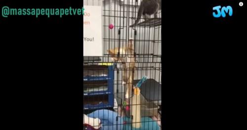 ケージに登る猫