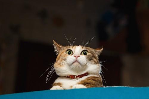 驚いて目を大きくする猫