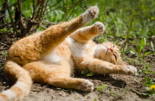 開脚する猫