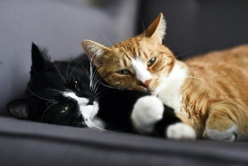 寄り添う黒白猫とオレンジ縞の猫