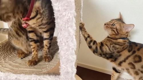 爪とぎに前足をかける猫