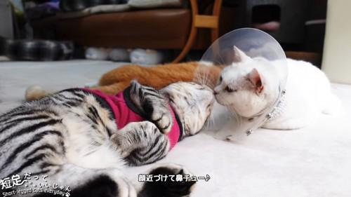 鼻を合わせる2匹の猫
