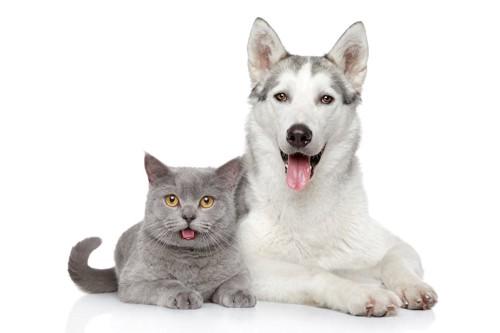 同じ格好をする犬と猫