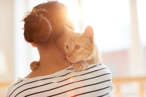 飼い主に抱かれてしがみつく猫