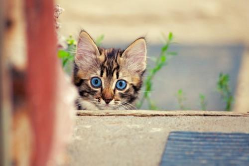 ひょっこり覗く子猫