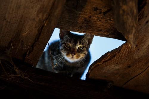 穴から睨んでいる猫