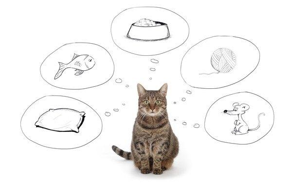 考え事をする猫