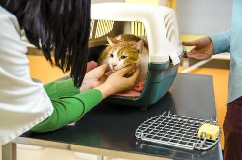キャリーバッグに入った猫を撫でる人