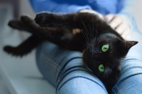 膝の上で横になる黒猫