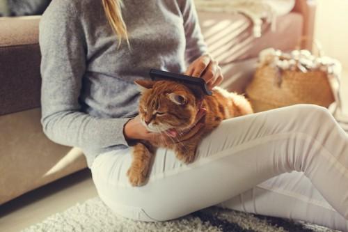 飼い主の膝の上でブラッシングしてもらっている猫