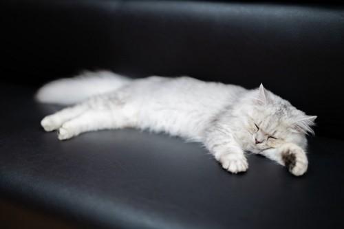 ソファに寝る猫