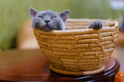 かごで眠るグレー猫