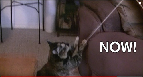 ソファに爪を立てる猫