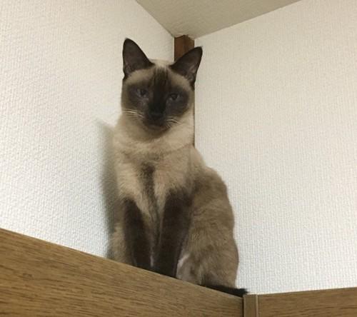 猫目線の写真