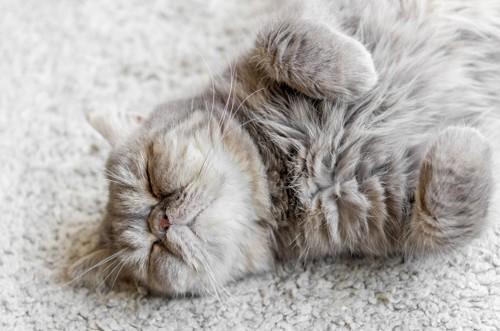 顎をあげて寝る猫