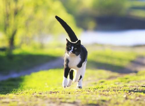 草原を走る猫