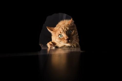 壁の穴を覗き込む猫