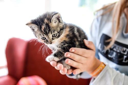 女性に抱き上げられる子猫