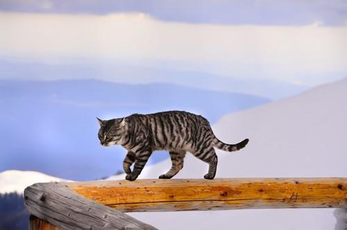 手すりの上を歩いている猫