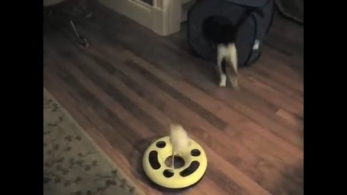 戻って行く猫