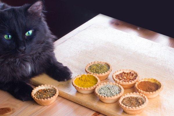 猫とカレースパイス