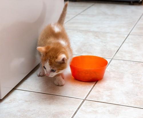 餌をよける猫