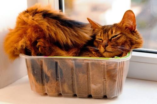 小さすぎる入れ物に入る猫