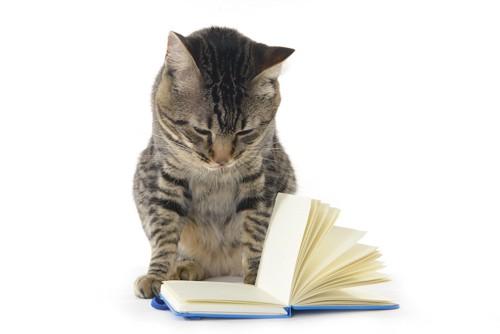 ノートを開いて見つめる猫
