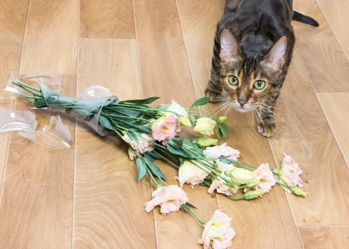 花瓶を倒して割った猫