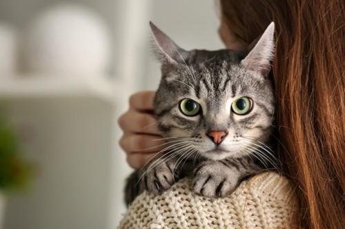 抱っこされて人の肩に前足を乗せる猫