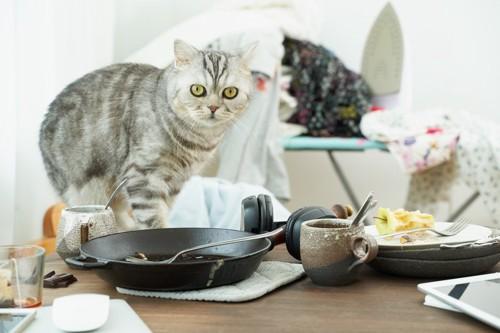 ちらかっているテーブルに乗る猫