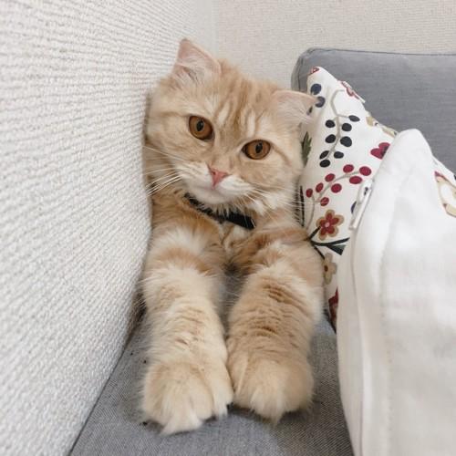 腕を伸ばしている猫