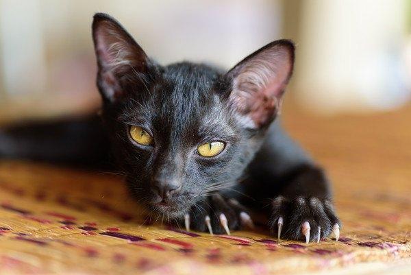 爪を出している黒猫