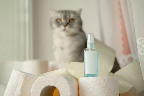 トイレットペーパーを倒した猫