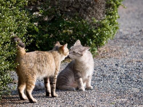 道で顔を近づけて挨拶する二匹の猫