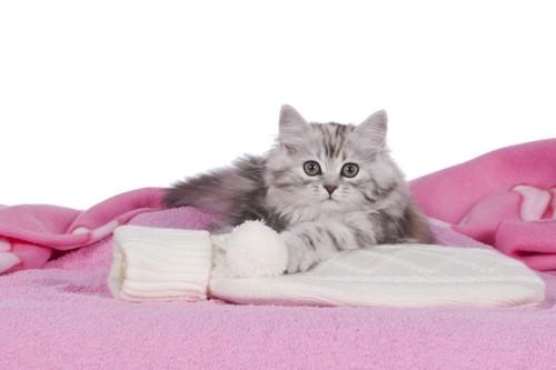 湯たんぽ触る猫
