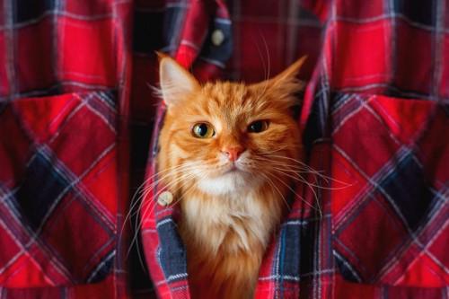 シャツの中の猫