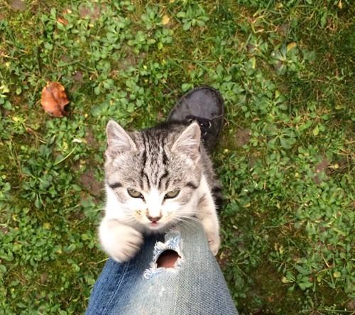 懸命に足にしがみつく仔猫