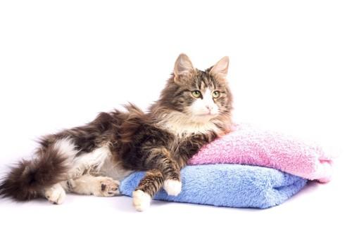 タオルに寄りかかる猫