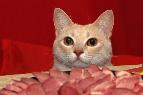 肉を前にした猫