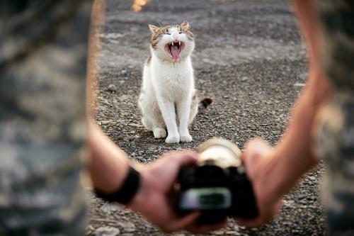 写真を撮られている猫がニャーと鳴く