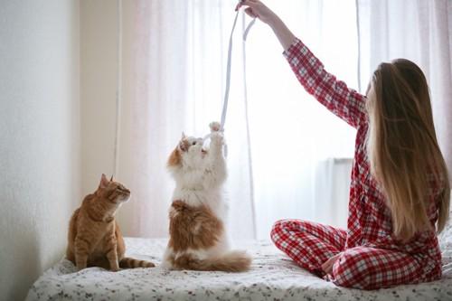二匹の猫と遊ぶ人