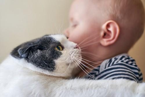 赤ちゃんにすり寄る猫
