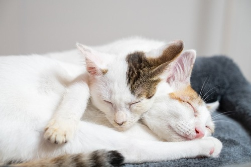気持ちよさそうに寝る二匹の猫
