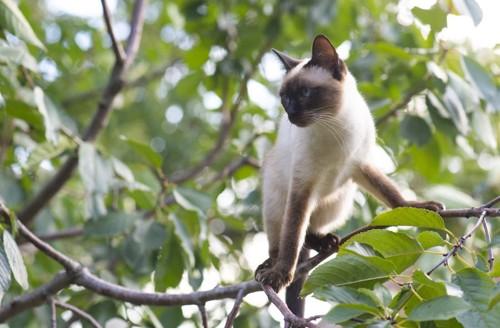 木の上で戸惑う猫