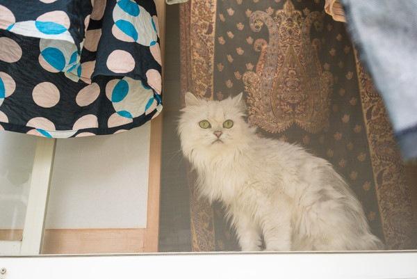網戸と白猫