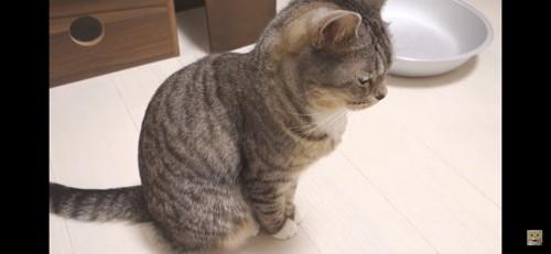 お座りする横向きの猫