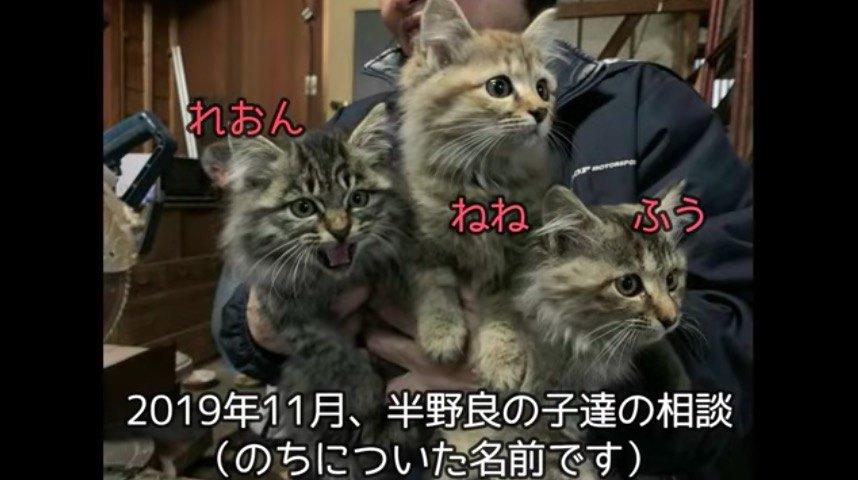 半野良猫たち