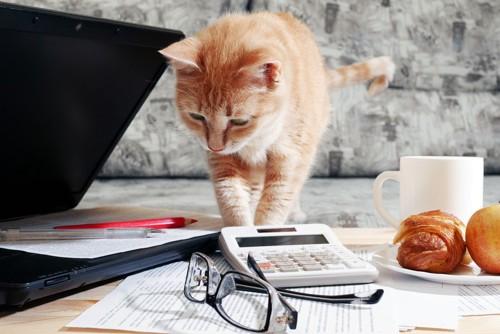 パソコンなどが乗っているデスクにいる猫