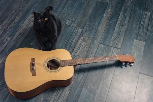 ギターの横に座る黒猫